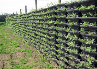 emprendimiento viveros chile proyectos verdes para la